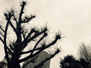 icyou-20160328tree
